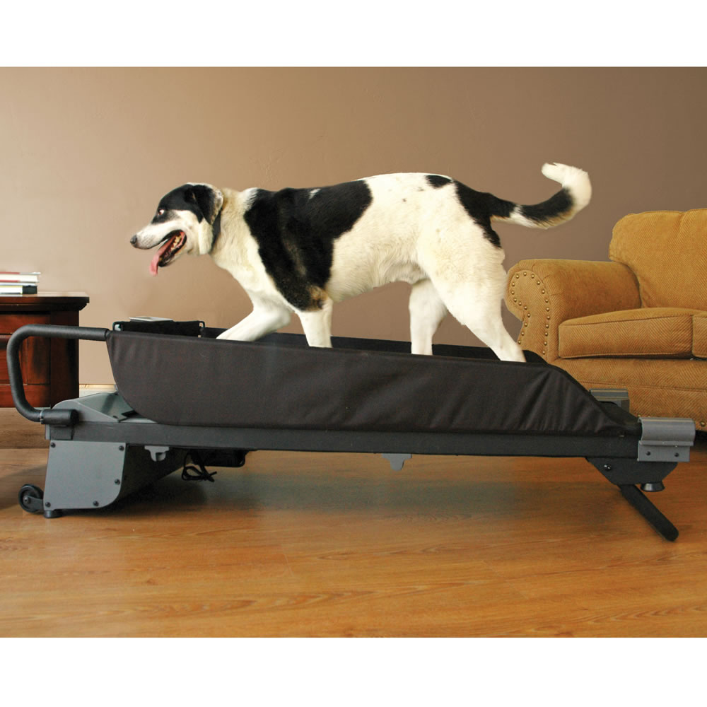 The Canine Treadmill 2