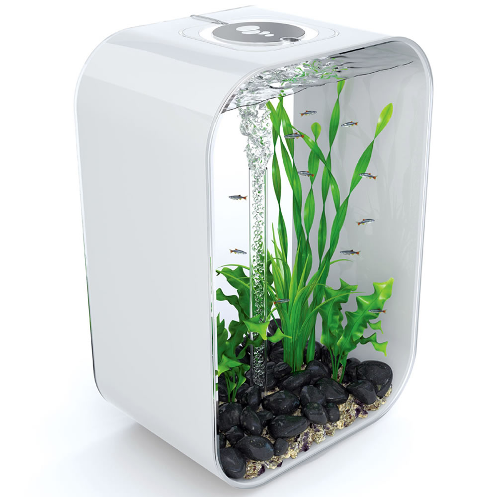 The 24 Hour Light Cycle Aquarium 1