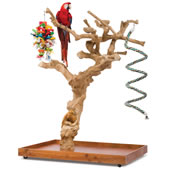 The Handcarved Coffea Tree Bird Perch.