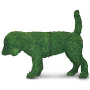 Small Dog Topiary.