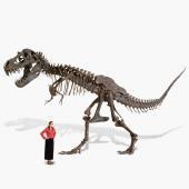 The Life Size Tyrannosaurus Skeleton.
