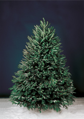 The Freshly Cut Christmas Tree (Slim 8').