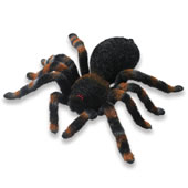The Remote Controlled Tarantula.