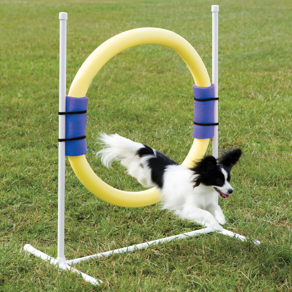 Backyard Dog Agility Course The Backyard Dog Agility Course Hammacher  Schlemmer .