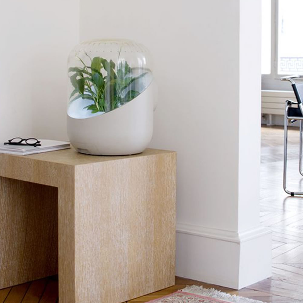 The Only Botanical Air Purifier 4
