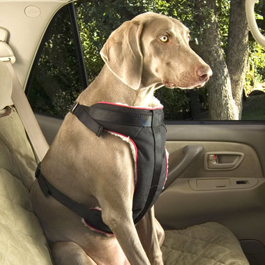 The Pet Seat Belt.