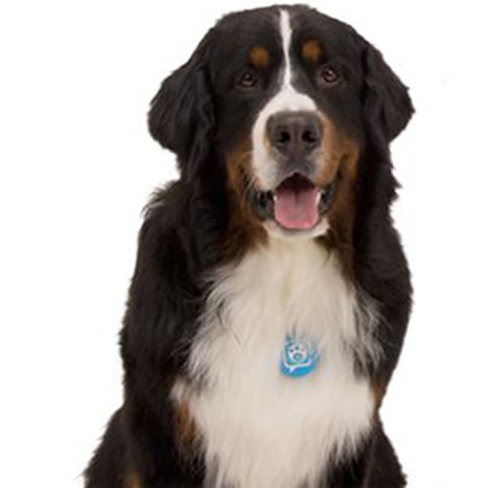 The Canine Twitterer2