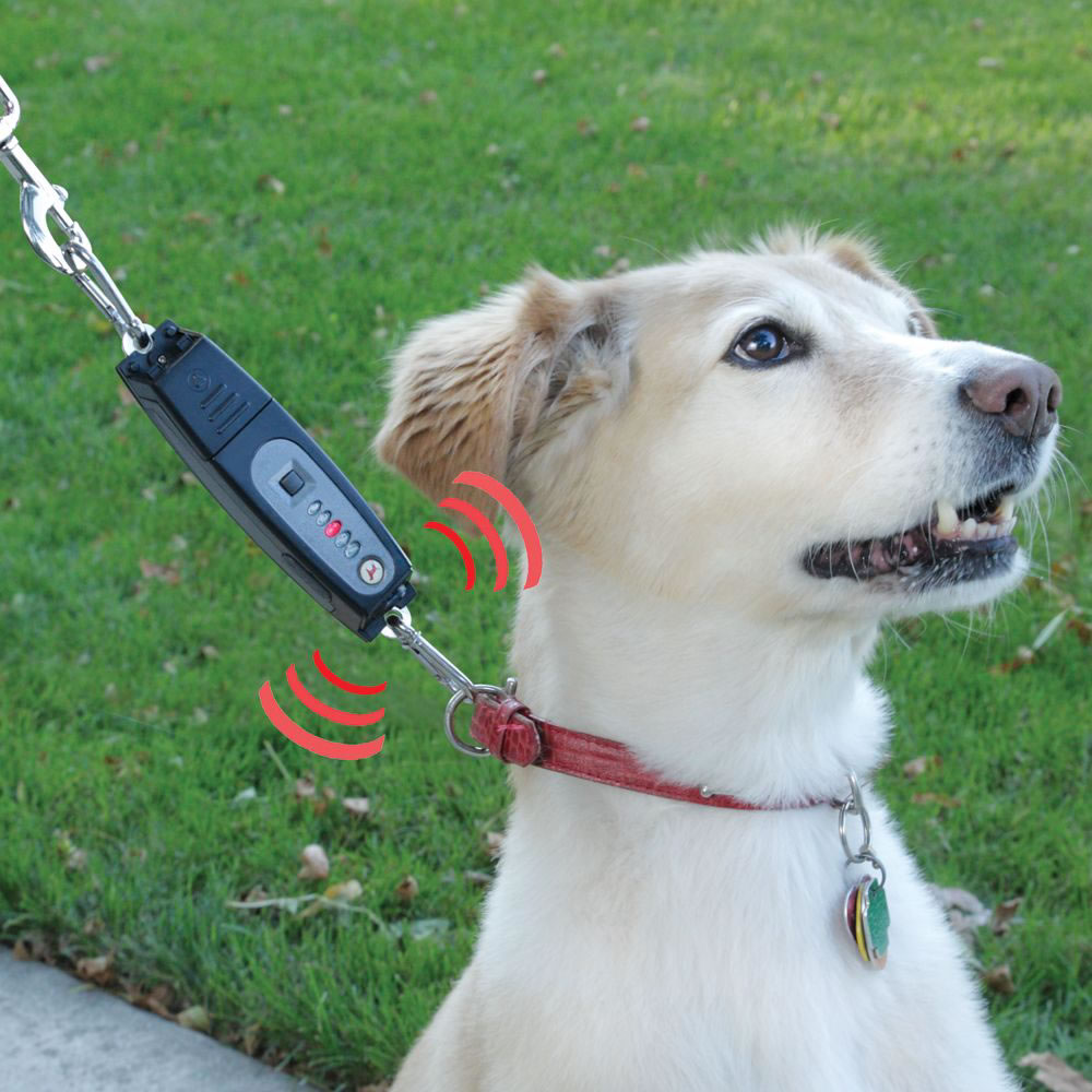 The Dog Command Trainer 2