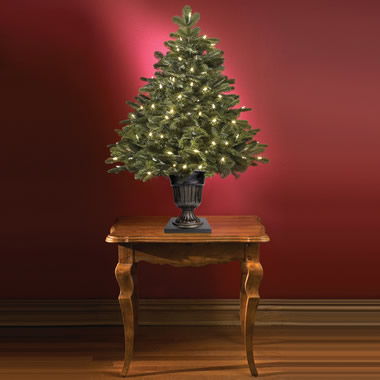 The World's Best Tabletop Prelit Noble Fir (LED)