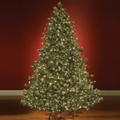 The World's Best Prelit Noble Fir (6.5' Slim).