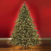 The World's Best Prelit Fraser Fir.