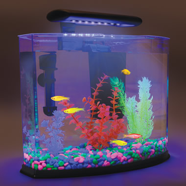 The GloFish Shangri-La.