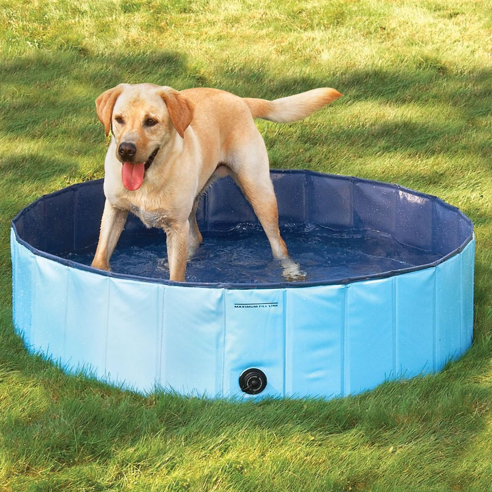 The Canine Splash Pool 2