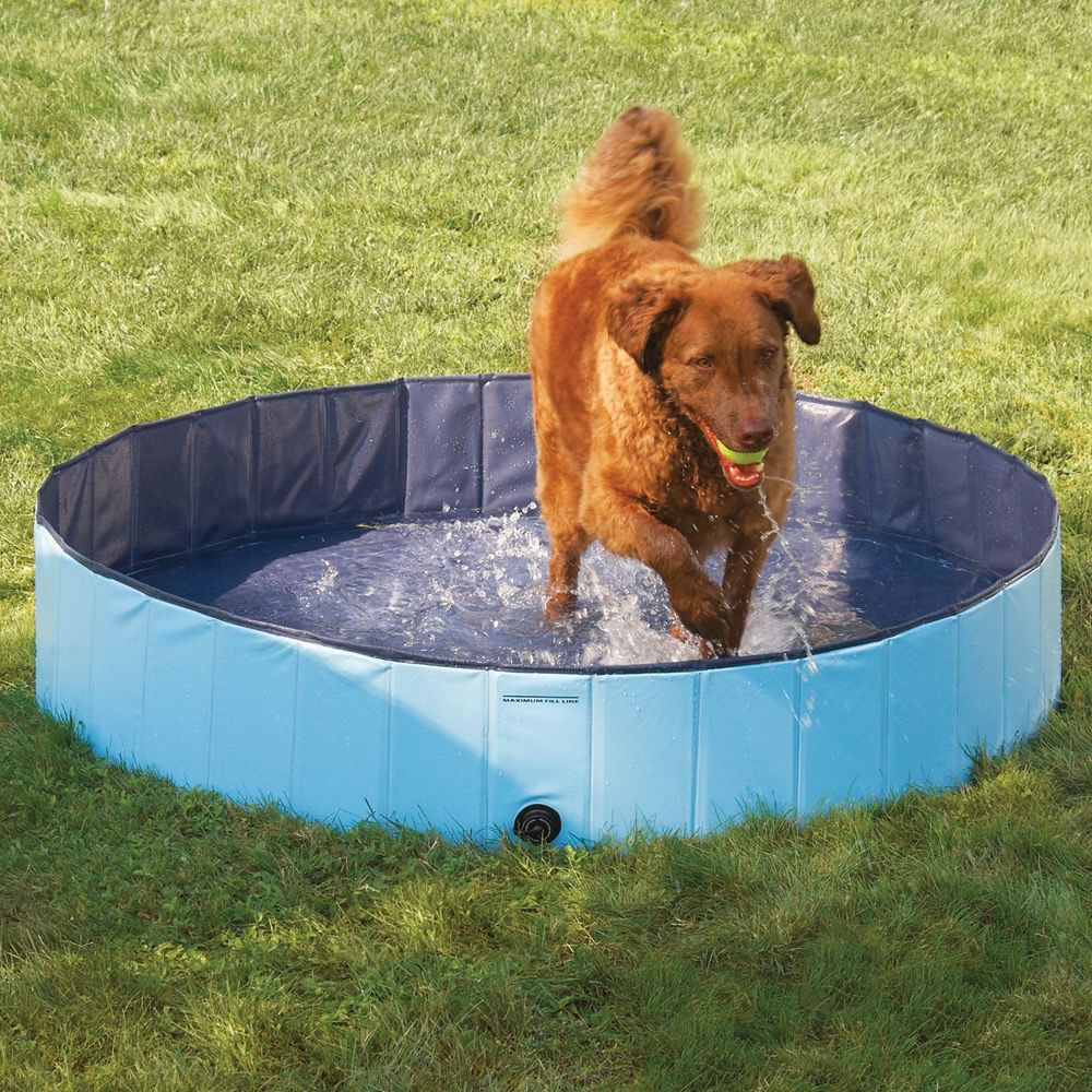 The Canine Splash Pool 1