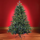 The 6 Foot Battery Operated Prelit Fraser Fir.