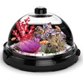 The Tabletop Saltwater Aquarium.