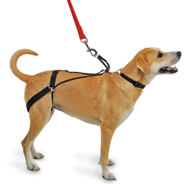 The Canine Tug Preventing Harness.