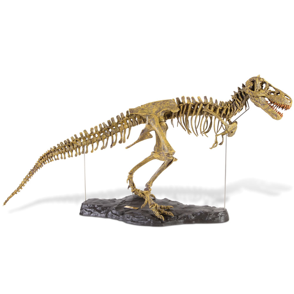 The Young Paleontologist's Authentic T-Rex Kit 2