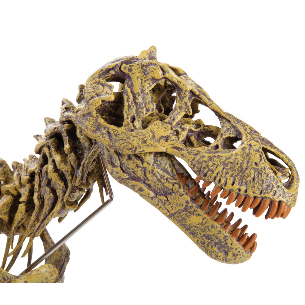 The Young Paleontologist's Authentic T-Rex Kit 4