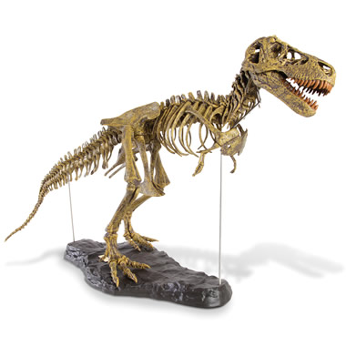 The Young Paleontologist's Authentic T-Rex Kit.