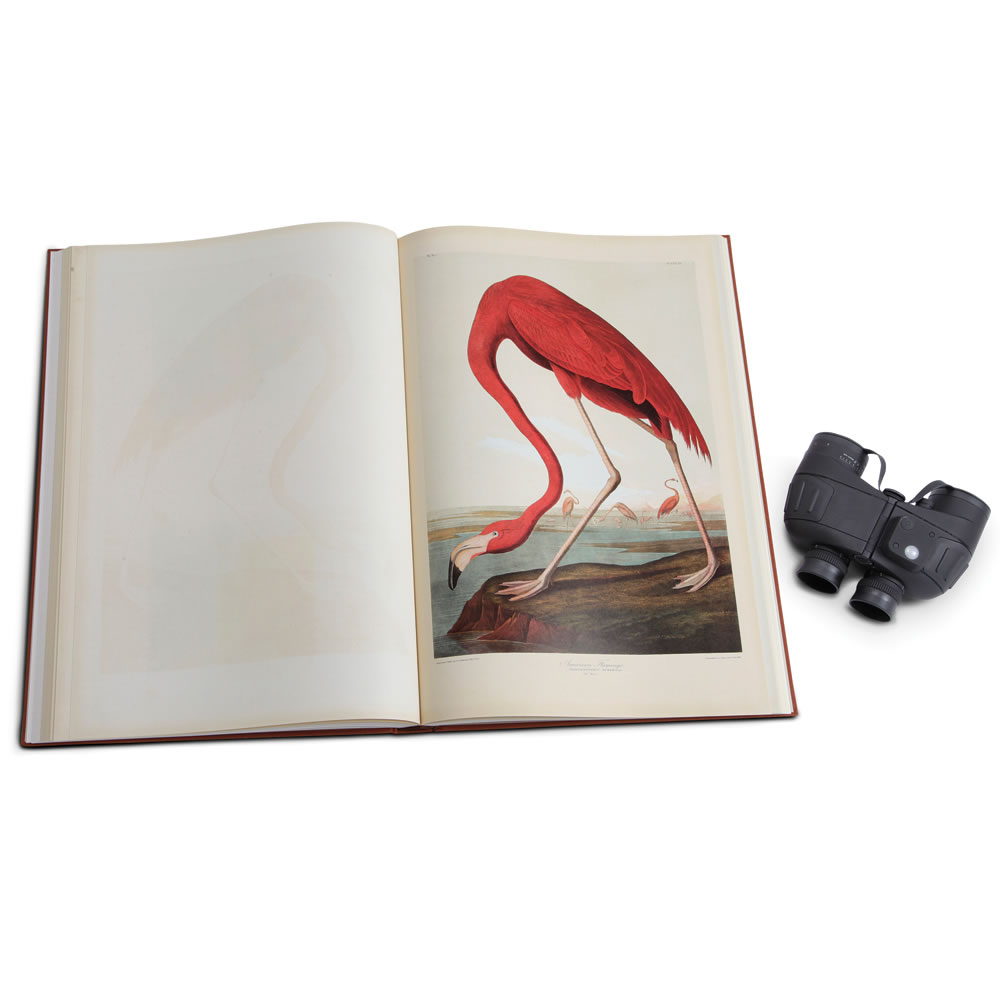 The Rare Prints Audubon Birds Of America 3