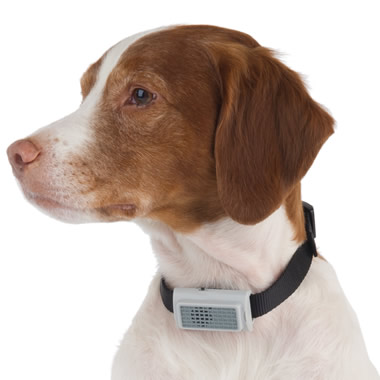 The Bark Deterring Ultrasonic Collar.