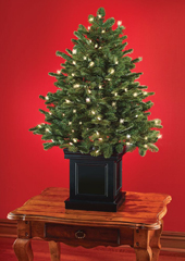 The World's Best Tabletop Prelit Fraser Fir.