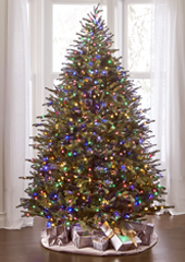 The World's Best Dual Lit Concolor Fir (6.5' Slim)