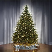 The World's Best Dual Lit Concolor Fir (7.5' Slim).