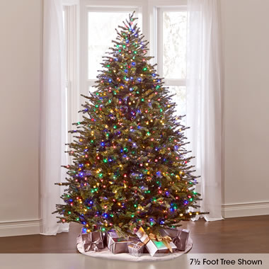 The World's Best Dual Lit Concolor Fir (8.5' Slim).