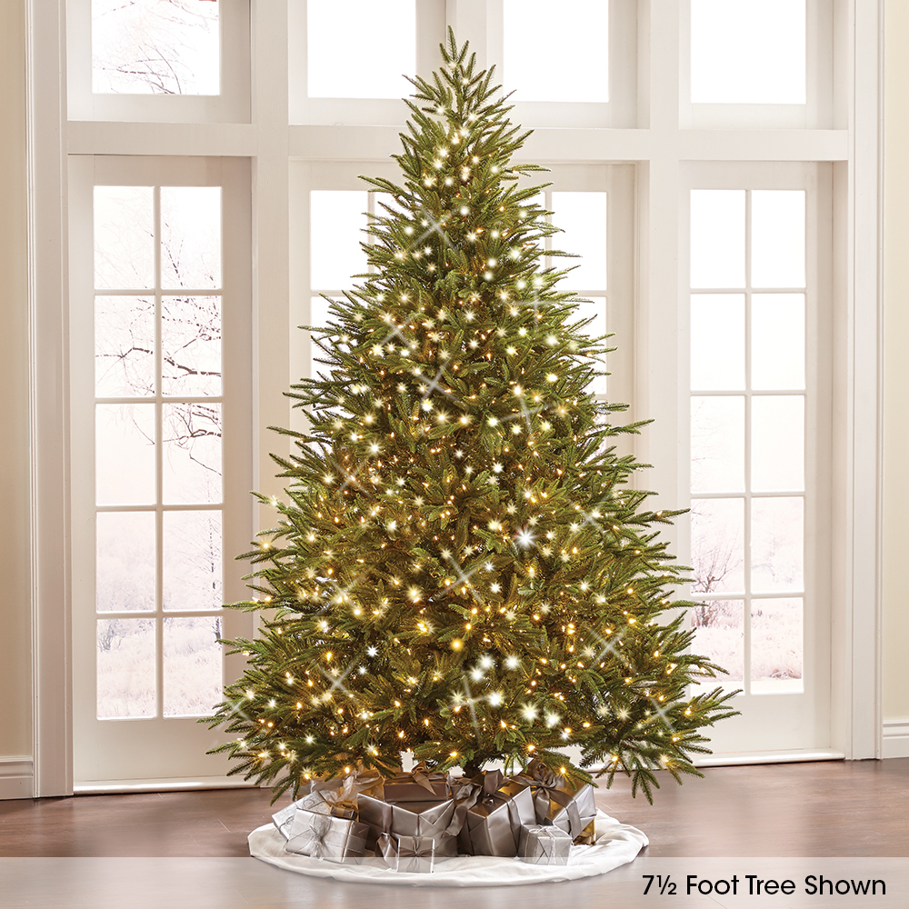The World's Best Prelit Fraser Fir (8 5' Slim LED)1
