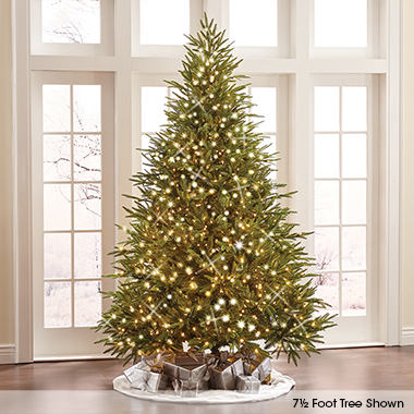 The World's Best Prelit Fraser Fir (8.5' Slim LED)