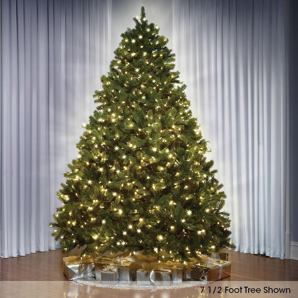 The World's Best Prelit Douglas Fir (6 5' Slim LED) 1