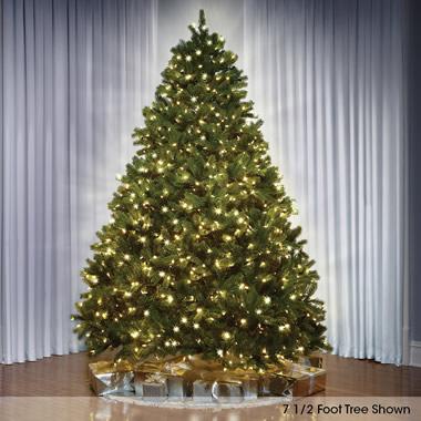 The World's Best Prelit Douglas Fir (6.5' Slim LED).