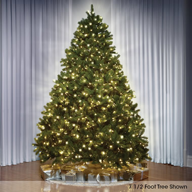 The World's Best Prelit Douglas Fir (7.5' Slim LED).