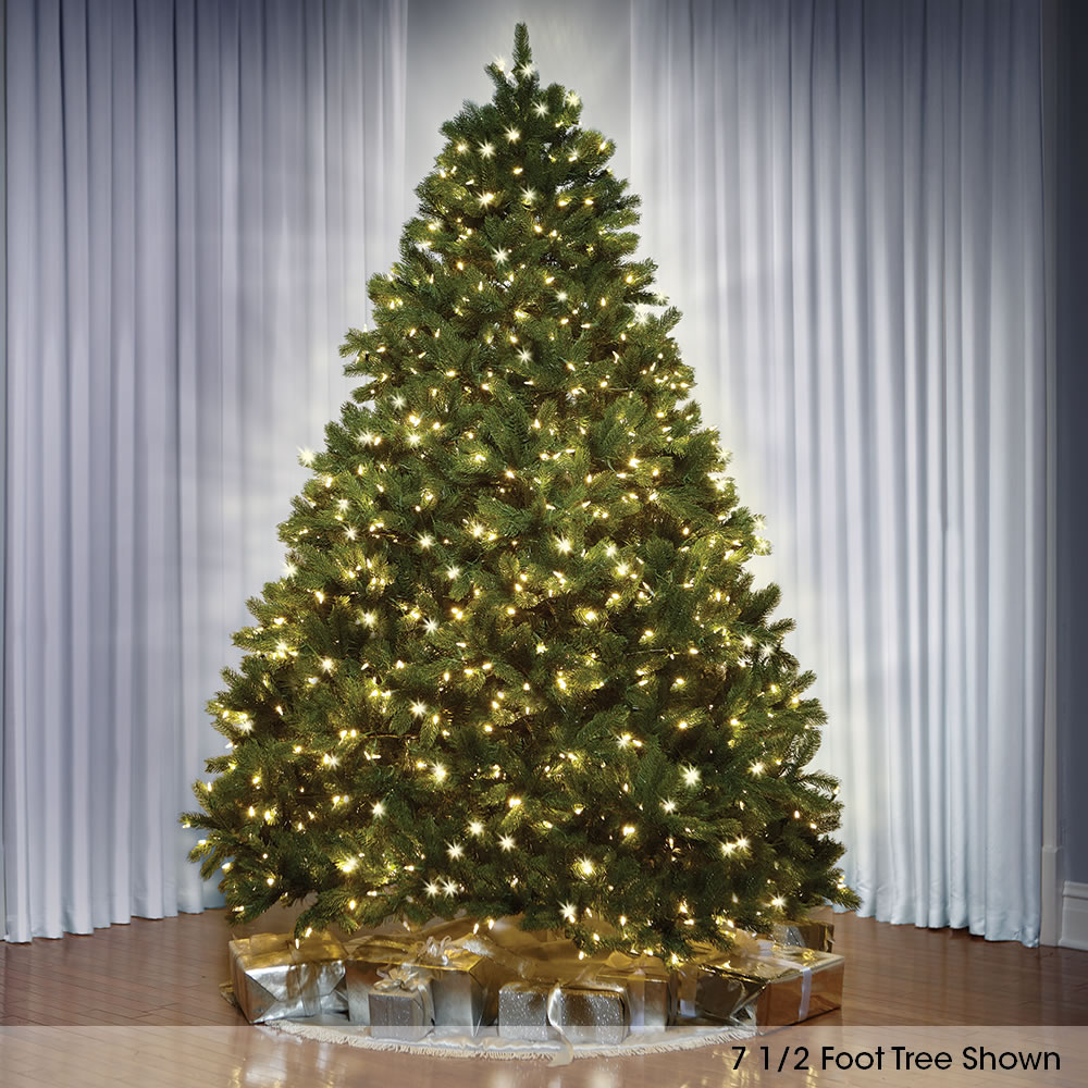 The World's Best Prelit Douglas Fir (8 5' Slim LED) 1