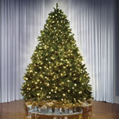 The World's Best Prelit Douglas Fir (8.5' Slim LED).