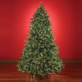 The World's Best Prelit Douglas Fir (9.5' Full LED).