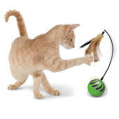 The Random Motion Cat Toy.