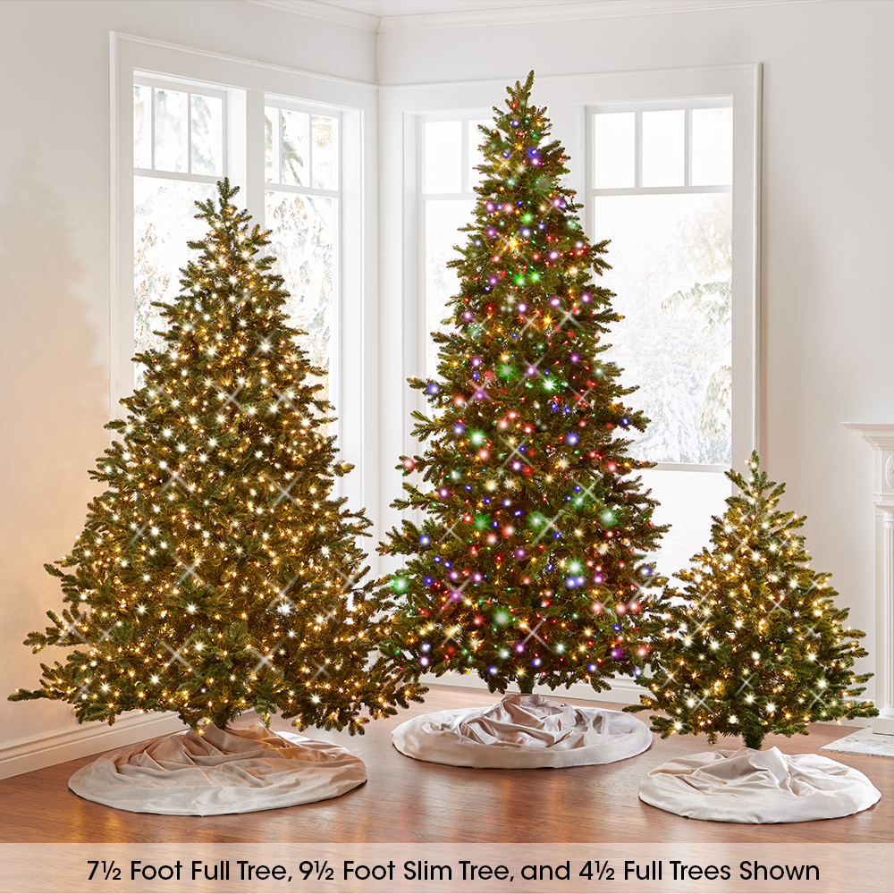 The World's Best Prelit Noble Fir (7 5' Medium)2