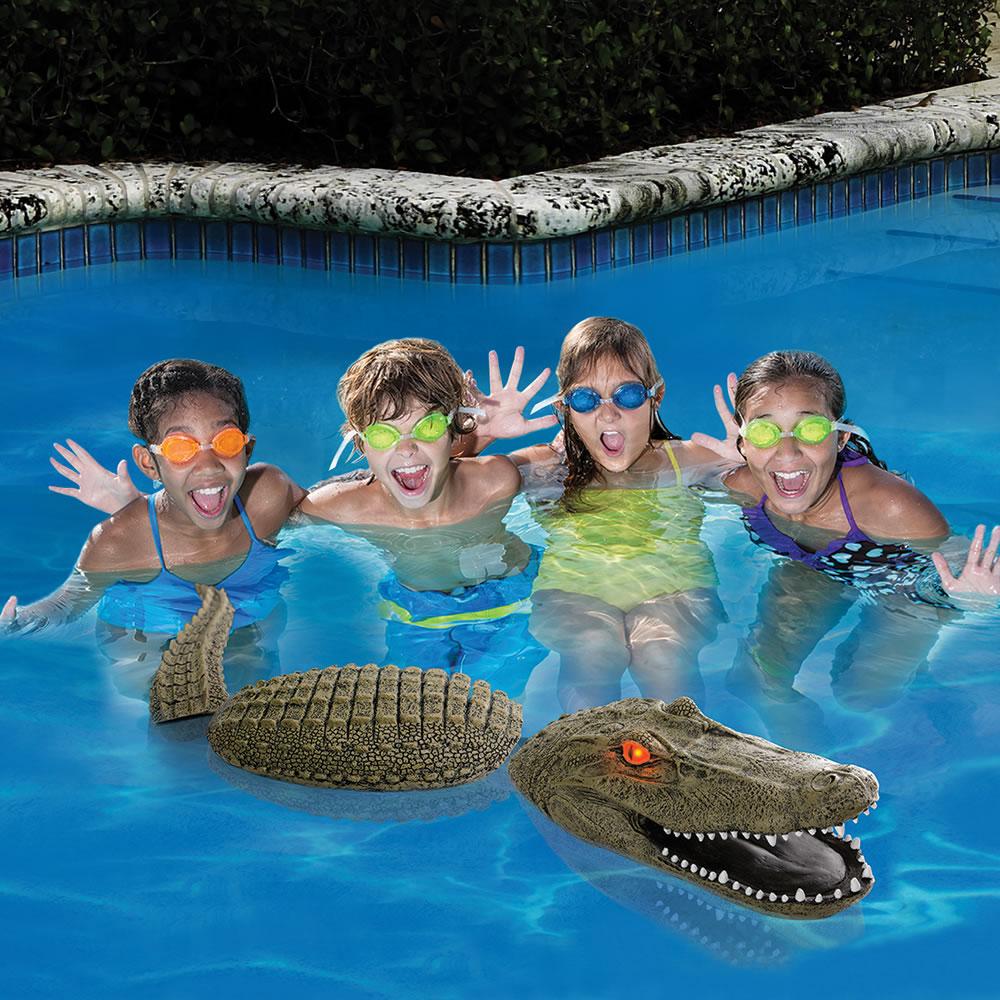The Pool Guarding Gator2