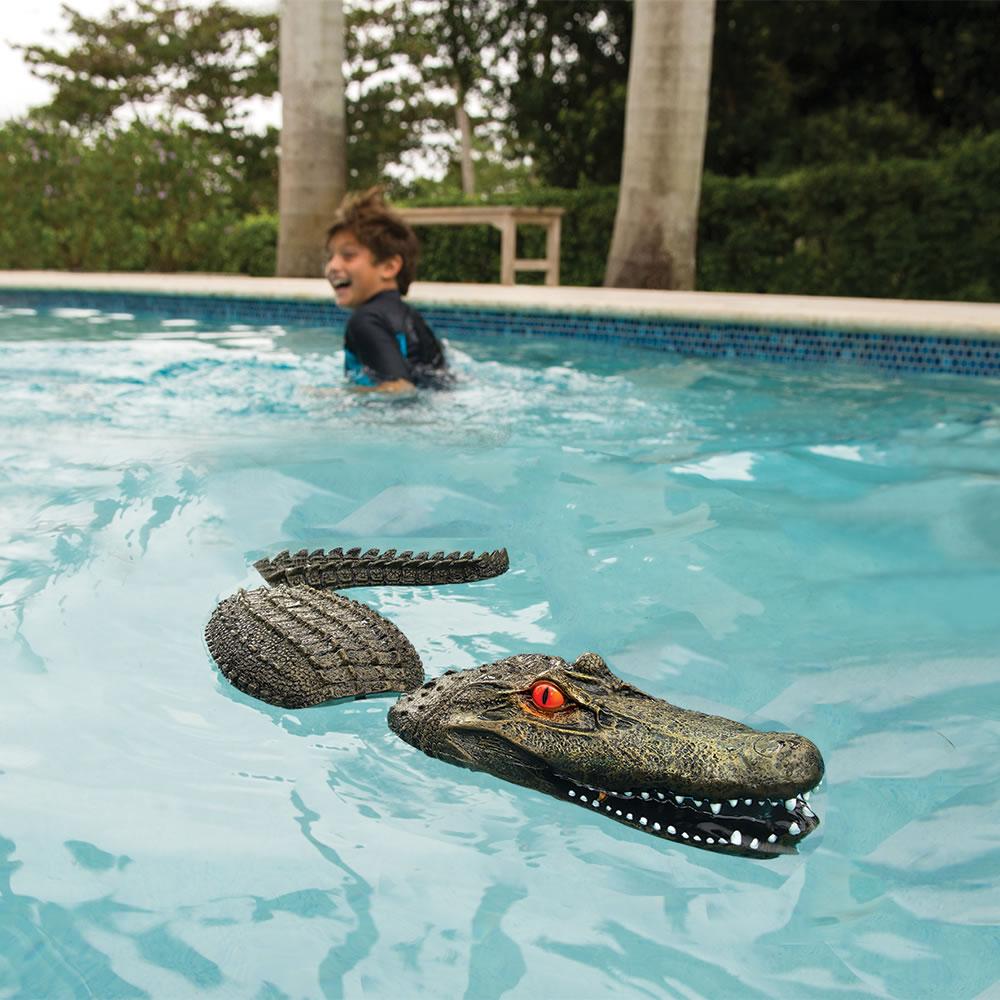 Alligators In Pool The Image Kid Has It