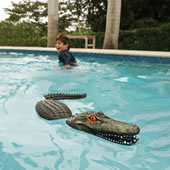 Terrorizing Pool Gator