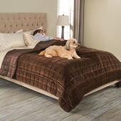 Pet Protection Coverlet Queen Cement