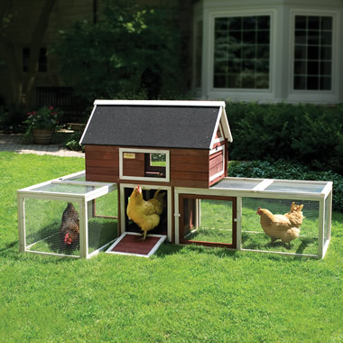 The Urban Poultry Palace