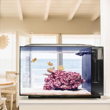 The Simple Set Up Saltwater Aquarium in Kitchen