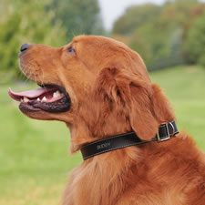 Your Dog's Personalized Leather Collar