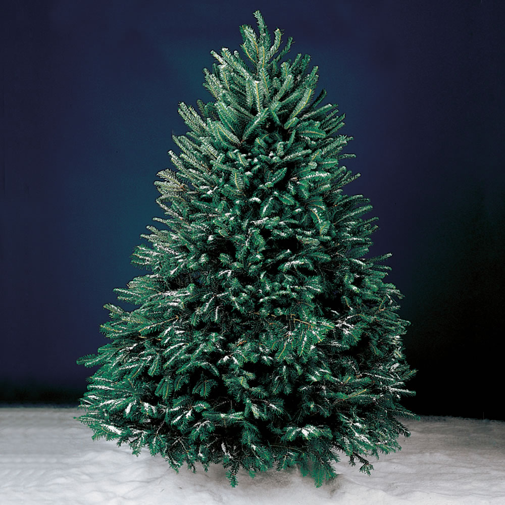 the freshly cut christmas tree full 5