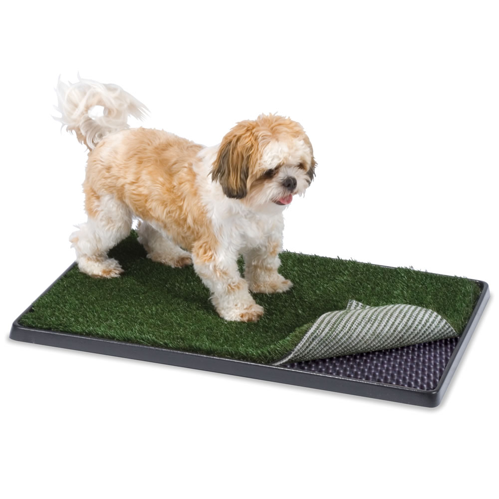 Best Indoor Rug For Dogs Important Tips Before Placing
