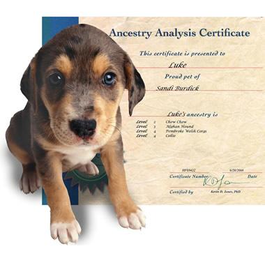 The Canine Genealogy Kit.